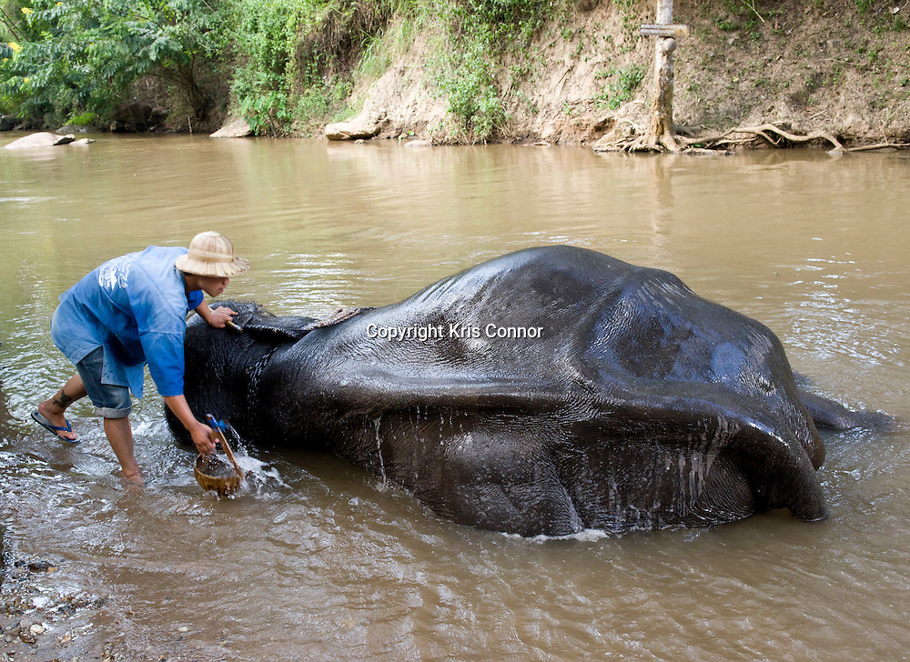 A man washes an elephant in a village near Chiang Mai, Thailand. Photo by Kris Connor