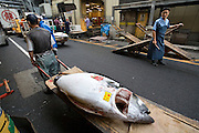 Tuna that has already been bought  is transfered to the cutting area of the market. Tsukiji fish market  is the biggest wholesale fish and seafood market in the world and also one of the largest wholesale food markets of any kind. The market is located in Tsukiji in central Tokyo, and is a major attraction for foreign visitors.
