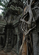 This image of Ta Prohm, the breathtaking, sprawling temple built in the Bayon style is only partially cleared of jungle overgrowth and has been left in much the same condition in which it was found.  <br /> <br /> Massive fig and silk-cotton trees grow from the towers and corridors making Ta Prohm one of the favorite temples to see in the Angkor Wat temple complex. This temple was originally constructed as a Buddhist monastery as one of Jayavarman VII's first major temple projects. <br /> <br /> The ruins of Angkor, a UNESCO World Heritage Site with temples numbering over 1000, are hidden amongst forests and farmland to the north of the Tonle Sap Lake outside the modern city of Siem Reap, Cambodia. <br /> <br /> It has been featured in many book, films and video games of pop culture most notably in the Angelina Jolie film, Lara Croft: Tomb Raider.