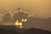 Desert Sunset, with a bird crossing the yellow sky Photographed in the Eilat Mountains, Eilat, Israel