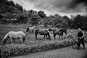 Horses eating grass in the mining town of Rosia Montana in Transylvania. Here was before houses were sold to the mining company and were demolished by the company to extract gold beneath the earth.