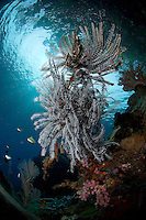 Crinoids, Damsels, and Overhanging Jungle
