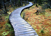 Walkway along the Milford Track, New Zealand