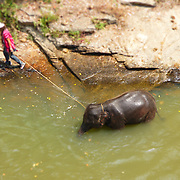 This image is of Mahout, Mook, who is leading DeeDee, the baby elephant in the river. Nukul likes the blur of the tilt shift technique she used when taking this image.