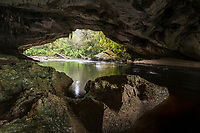 Moria Gate Arch is 19 m high and 43 m wide and its ceiling is extensively covered with stalactites and roots. The center portion of the river cave is spacious and its floor covered in sand accumulated by the Oparara River flowing through it. Kahurangi National Park, South Island, New Zealand.