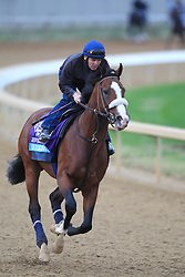 Breeder's Cup Juvenile entry Union Rags galloped during morning workouts in preparation for Breeder's Cup 2011 at Churchill Downs in Louisville Thursday, Nov. 03, 2011. Photo by Jonathan Palmer