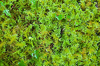 Close-up of moss in the Hoh Rainforest.
