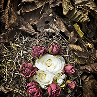 small bird nest made from grass and twigs with autumn leaves and red and white roses