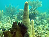 Samsara house reef