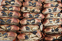 Crabs on display outside a fishmongers in Bridlington,