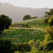 A variety of mountain scenes in the Santa Cruz Mountains near Los Gatos.