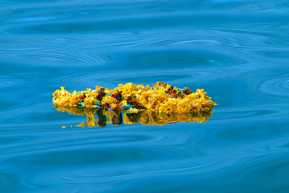 A garland of flowers used for Hindu rituals floats down the sacred Ganges River in Varanasi, one of India's holiest cities. The Ganges River is one of the most polluted rivers in the world.