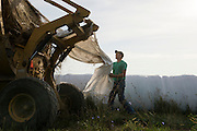 Alex Peterson unwraps silage for the morning cattle feeding. Peterson Dairy grows its own feed, which is sometimes used right away or cut and stored as silage.