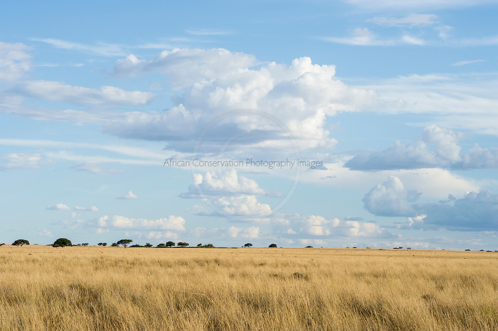Long golden dry grasslands with afternoon thunderclouds and a pale blue sky, Benfontein Nature Reserve, Northern Cape, South Africa