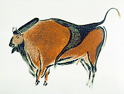 Bison: Palaeolithic cave painting at Altamira, northern Spain. Lithograph published in John Lubbock lst Baron Avebury 'Prehistoric Times' London 1913