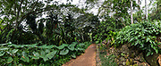 Pathway through lush green tropical plants in Allerton Garden, on the south shore of Kauai, Hawaii, USA. Address: 4425 Lawai Rd, Koloa, HI 96756. Nestled in a valley transected by the Lawai Stream ending in Lawai Bay, Allerton Garden is one of five gardens of the non-profit National Tropical Botanical Garden (ntbg.org). This image was stitched from multiple overlapping images.