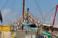 Fish drying on the deck of a fishing boat at Aberdeen floating village Hong Kong Hong Kong August 2008