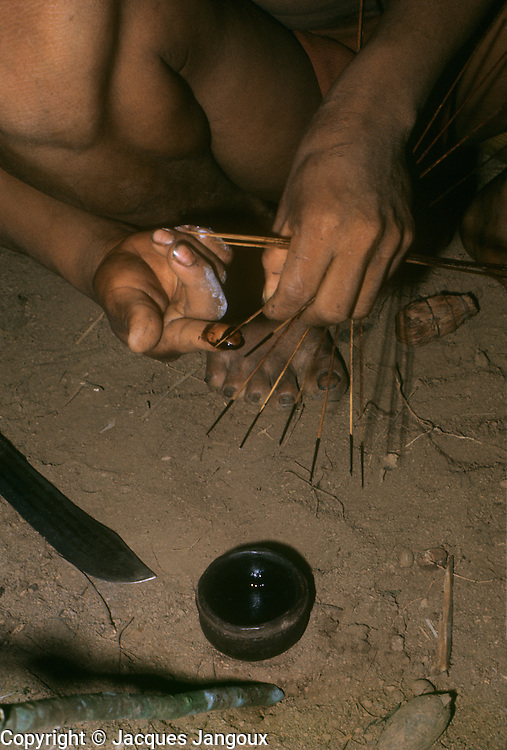 South America, Venezuela, Guyana Highlands. Eñepa (Panare) Indian tribe. Man applying curare poison to blowgun darts.
