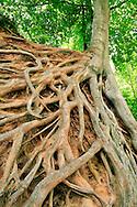Spaghetti Tree - Downtown Greenville, SC