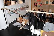 COSMO, Jonathan Adler Store opening. Sloane St. London. 16 November 2011. <br /> <br />  , -DO NOT ARCHIVE-© Copyright Photograph by Dafydd Jones. 248 Clapham Rd. London SW9 0PZ. Tel 0207 820 0771. www.dafjones.com.