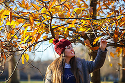 © Licensed to London News Pictures. 29/11/2016. London, UK. A woman looks at remaining autumn leaves in Hyde Park, London on a frosty morning as temperatures in the capital drop as low as -3C on Tuesday, 29 November 2016. Photo credit: Tolga Akmen/LNP