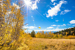 """Raining Sunshine 1"" - Photograph of yellow Aspen leaves falling from the trees above Lake Tahoe in Autumn."