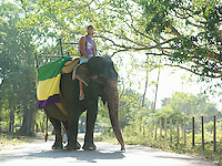 Young man riding elephant on road in trees