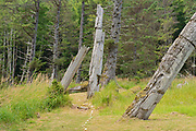Old Haida  totems poles at Skedans Village. Louise Island. , Haida Gwaii (formerly the Queen Charlotte Islands), British Columbia, Canada