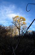 Trees tower over the grasslands in Empire Gulch, Sonoita, Arizona, USA.