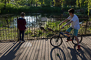 As the number of new Coronavirus cases in the UK climbs to 201,101, with UK deaths now standing at 30,076 - the highest recorded in Europe, <br /> while maintaining a safer social distance during the continuing Covid lockdown, local children admire the gaggle of young goslings recently hatched by resident geese in Ruskin Park, a public green space in south London, on 6th May 2020, in south London, England.