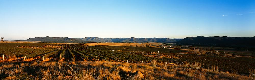 Sunrise over vineyards, Broke, Hunter Valley, Australia