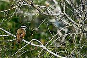 Wildlife photography from Laguna Atascosa National Wildlife Reserve, Texas, USA