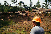 CHILDERSBURG, AL – AUGUST 3, 2018: Rick Nelms, 57, surveys a final harvest of Loblolly Pine on a tract located 50 miles outside of Birmingham. <br />