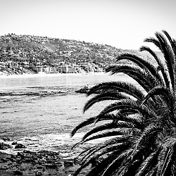 Laguna Beach California black and white picture. Photo has a palm tree in the forground with the Pacific Ocean and oceanfront Laguna Beach homes. Laguna Beach is a beach town in Orange County Southern California. Copyright © 2012 Paul Velgos with All Rights Reserved.