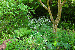 Corner of the woodland garden at Glebe Cottage in May