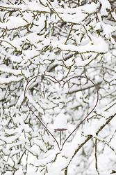 Heart shaped metal bird feeder