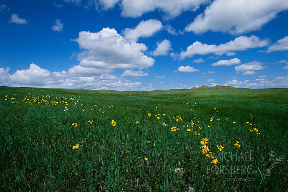 Shortgrass prairie. Oglala National Grassland, Sioux County, Nebraska.