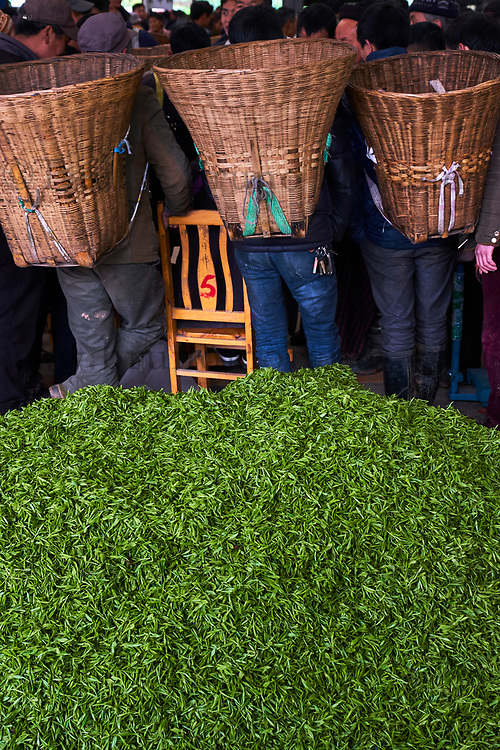 Chine, Province du Sichuan, Emei, marché de thé frais, les petits propriétaires viennent vendre la récolte du jour // China, Sichuan province, Emei, fresh tea market, the pickers sale the leaves from the day crop
