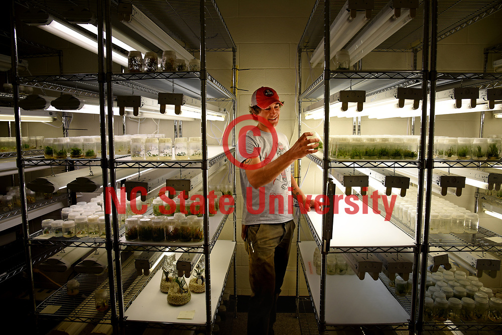 Nate Maren, grad student researcher at Mountain Horticultural Research and Extension Center, looks over cultures in a lab.