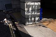 A pet terrier dog walks in the gutter past the shadowy Ritz words on a street pillar.