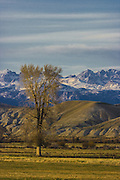 In the region of the Upper Green River Basin traditional ranch life is threatened by the oil and gas development. These scenes depict ranch environment along the Green River and surrounding areas. Many of these ranchers are planning to put their places into conservation easements to preserve the environment and lifestyle here and to protect agains oil and gas development. Wind River Range from ranch.