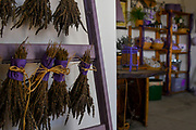 Aromatherapy bouquet of lavender plants drying to be used as potpourri