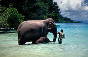 "Swimming elephants in the Andaman Islands<br /> <br /> The Andaman islands are a piece of India sparkled in the Bay of Bengal long closed to foreigners. A thousand kilometers from the coasts of the Indian subcontinent, this archipelago of over 500 isles -of which 27 are inhabited- are covered year-round in dense tropical vegetation. Elephants are used here in the timber industry and enjoy a swim when they are displaced from one island to another.<br /> <br /> Indians call this archipelago ""kala pani"" or ""dark waters"". But the Andaman islands, set in the green waters and limpid waves of the Bay of Bengal, hardly deserve this foreboding description. Closer to Burma and to Indonesia than to India, the Andamans were originally peopled by Negritos, an Asian pygmy tribe living as in the Neolithic Age. The islands were converted into a penitentiary locality by the British in 1857, date of the ""sepoy rebellion"" which claimed many English lives in Lucknow, India.<br /> <br /> The Andamans were opened to Indian immigration after independance in 1947. But the door was kept closed on many islands to preserve the lifestyle of the original inhabitants. To this day, tourists are allowed only into the capital, Port Blair, and to the islands of Jolly Buoy and Cinque.<br /> <br /> Forested lands cover three-quarters of the 4,000 square kilometers or so which comprise the islands, featuring varieties from Burma, Indonesia and India. Settlers include exiled Karens from Burma, Bengali Hindus who fled the former East Pakistan in the Sixties and immigrants from Bihar, India and Malaysia.<br /> <br /> Most of this population of 200,000 thrive from the timber industry and enjoy the precious help of elephants to transport cut wood. A most environment-friendly means of moving timber which avoids having to build roads through forested land. Despite their 4,5-ton mass, the elephants are able to move on jungle tracks with ease.<br /> ©Olivier Blaise/Exclusivepix"