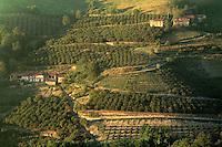 August 1997, Piedmont, Italy --- Vineyards in Piedmont --- Image by © Owen Franken/CORBIS