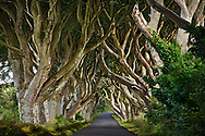 Dark Hedges of Northern Ireland, UK