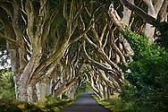 Dark Hedges of Northern Ireland, UK