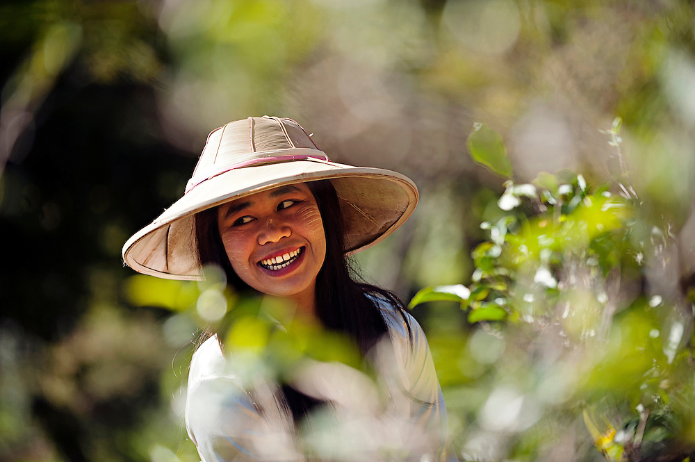A tea farmer in the northern Shan state, Myanmar.