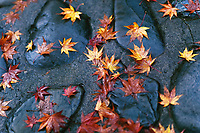 Fallen yellow Japanese maple leaves on shiny wet stones after a rain in Kyoto, Japan, Wabi-Sabi concept, abstract tranquil background.