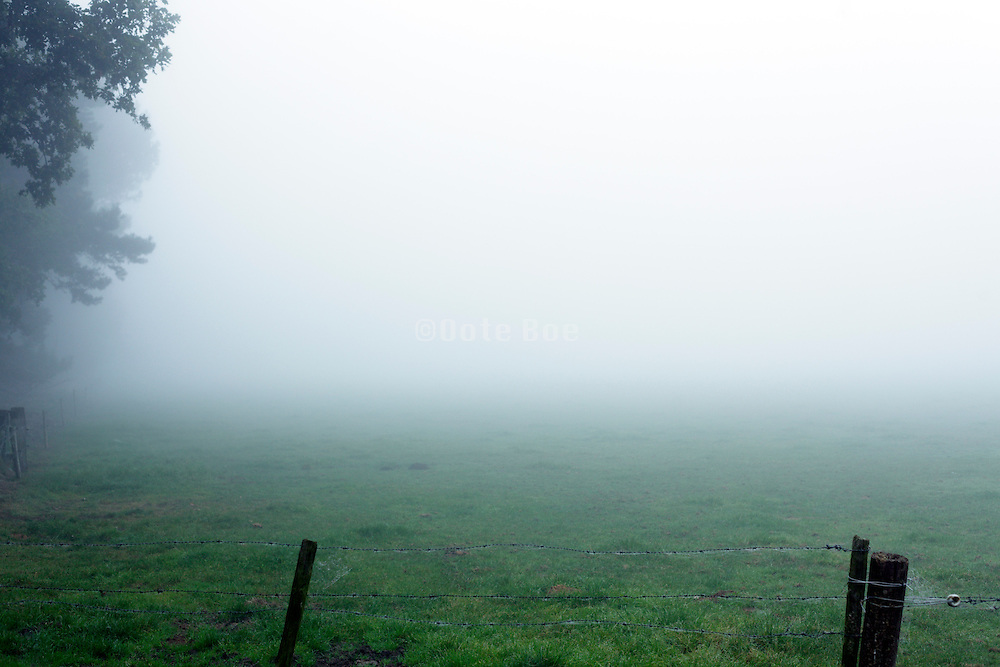 rural pasture landscape with fog and trees
