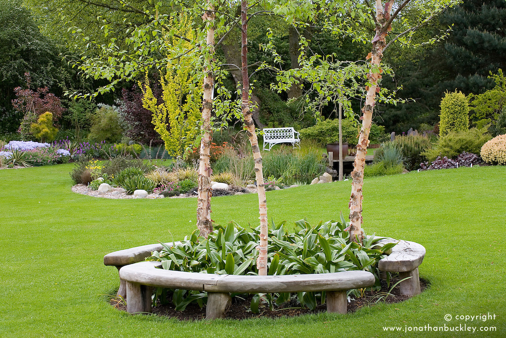 Curved bench seats around three birch trees - Betula nigra 'Heritage' in John Massey's garden in spring.